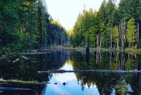 3 Beautiful Trails Around Redmond, Washington