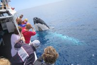 Reasons Why You Should Go On A Whale Watching Tour