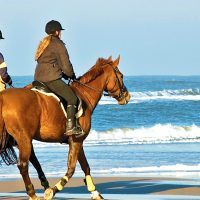 Best Horse Riding Trips For Holidays